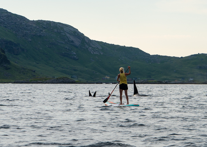 SUP og spekkhoggere, stand up paddle, schibevaag adventure, Lofoten